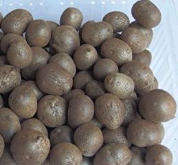 むかご 食べ 方 むかごの食べ方、栄養や効果効能、保存方法は?生もOKなヤマノイモの...