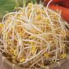 もやしの食物繊維について紹介、意外と入っている食物繊維