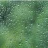 『しとしと』降る雨と『ぽつぽつ』『ぱらぱら』降る雨の違いって?